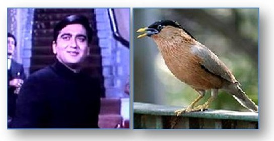 Sunil Dutt and brahminy myna