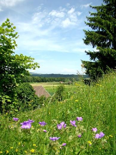 Wildflowers in Gruyeres