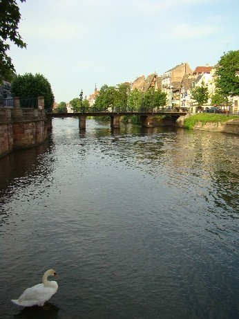 Strasbourg - and a swan