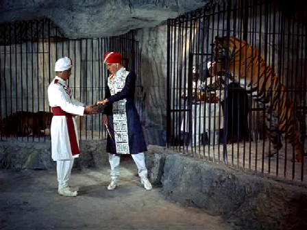 Chandra feeds his pet tigers
