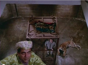 Mehmood and Dharmendra - and an unfriendly tiger, in Aankhen (1968)
