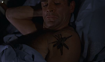 A nasty surprise - a tarantula in bed