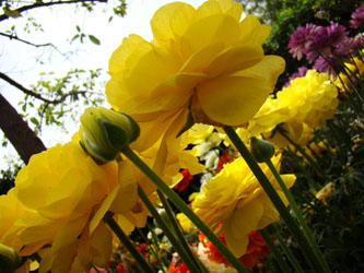 Ten of my favourite spring songs dustedoff i dont know which post they ended up at but it reminded me spring is here in delhi and ive never yet done a post on songs about spring mightylinksfo