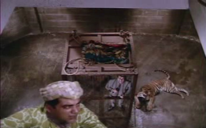 A tiger, Sunil in a cage, and more.