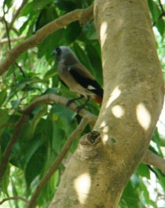 Local denizens: a bird in a tree at The Glasshouse.