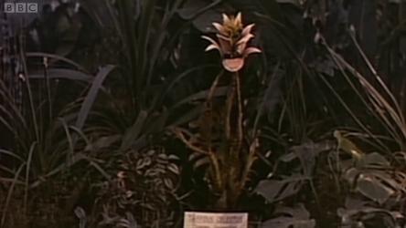 A triffid at the Royal Botanic Gardens