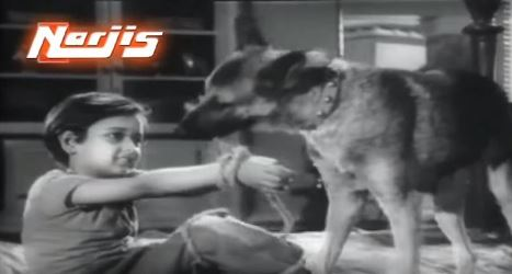 Raju gets some canine help
