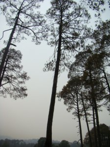 View from near the golf course at Ranikhet.