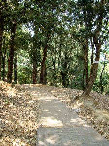 In Chaubatia Gardens: a path leads through pine and oak woods.
